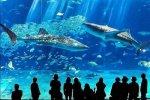 В аквариуме Барселоны