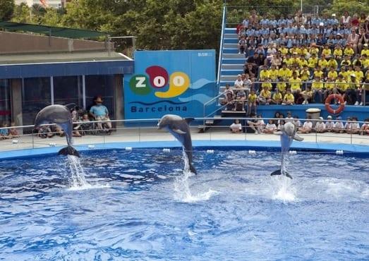 Дельфинарий в зоопарке Барселоны