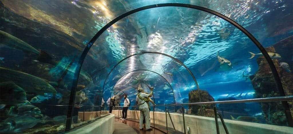Тоннель в аквариуме Барселоны